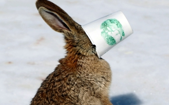 Rabbit gets stuck in cup