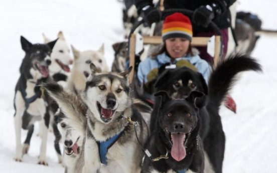 100 dogs in Canada killed after business slows
