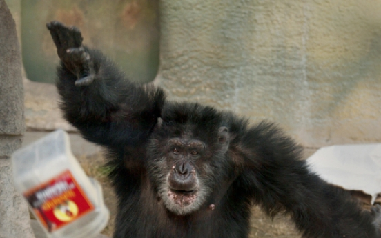 Chimpanzee meat on sale in Britain's restaurants and markets