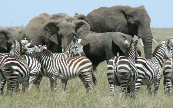 Serengeti: Tanzania's food chain up close and personal
