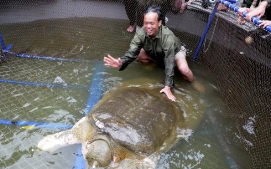 'Sacred' turtle captured in Vietnam lake