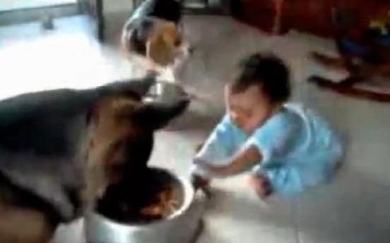 Netizens slam parents of baby vs. dog video