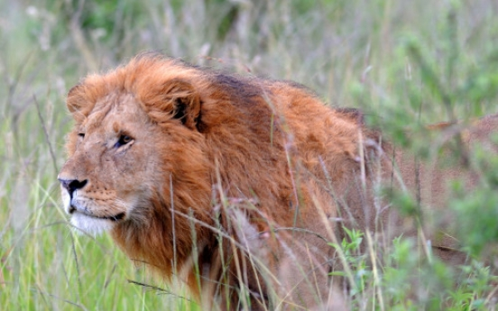 Into the wild: Kenya blends adventure, serenity