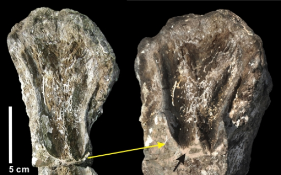 Longest carnivorous dinosaur tooth-marks found in Hadong