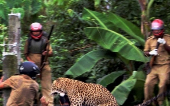 Leopard mauls 11 in fierce fight at Indian village