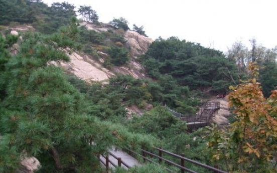 Forest bathing in middle of Seoul's concrete jungle