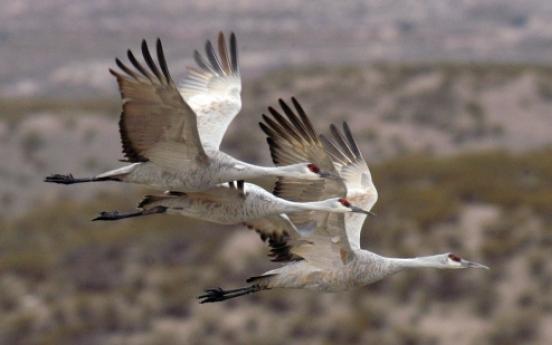Bird-watching big business in Arizona