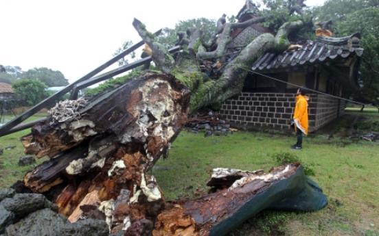 Typhoon Muifa pummels Jeju, hampers air, sea travel
