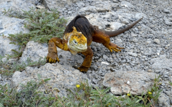 Following in Darwin's footsteps in Galapagos visit