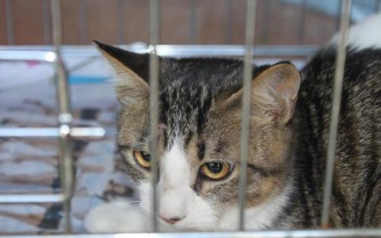 Volunteers seek to end stray cat problem