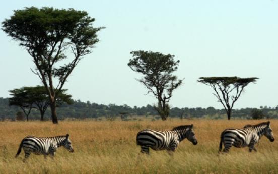 Tanzania on safari: a 'unique, amazing place'