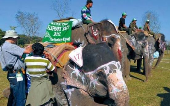 Elephants race, play soccer in Nepal festival