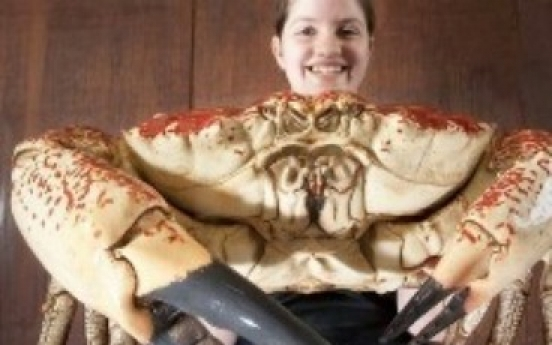Giant crab to be on display at British aquarium