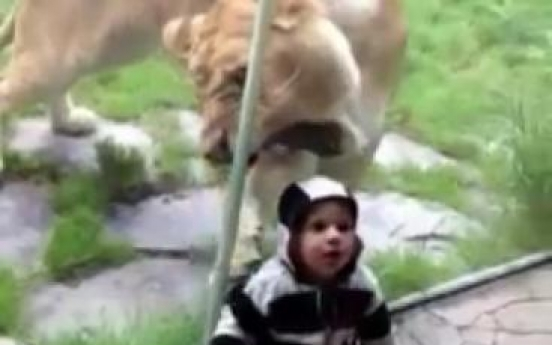 Hungry lion goes after baby wearing zebra colors, in vain