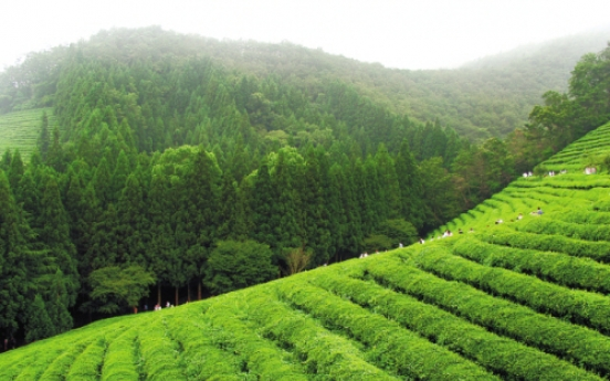 Sip, celebrate, and learn: Ways to enjoy Korean green tea