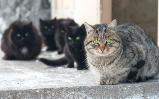 Couple splits over wife's 550 cats