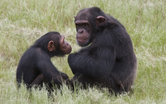 Chimps attack American at South Africa sanctuary