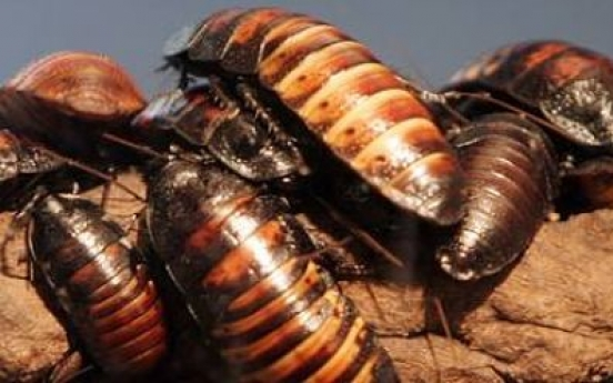 Florida man eats bugs, dies