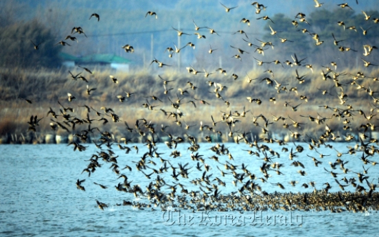 Action needed to save migratory birds