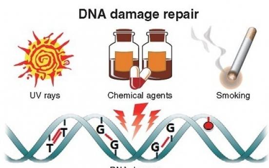 Korean scientists find ways to repair DNA damage