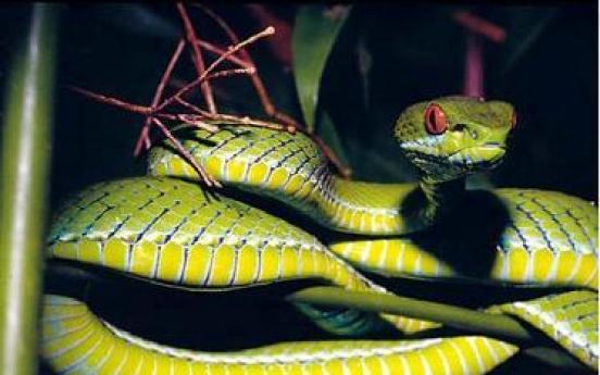 New species, old threats to Mekong wildlife