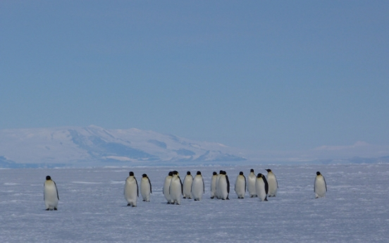 Antarctic summer ice melt accelerating: study