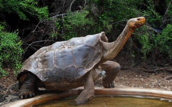 Effort to revive Galapagos tortoises once thought extinct