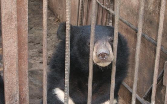 Couple seeks to end bear bile trade in Korea, build sanctuaries