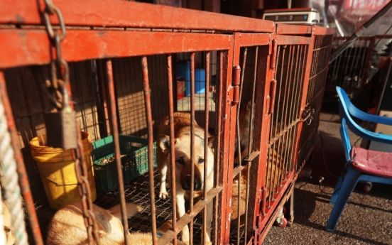 Illegal dog slaughter to be banned in Moran Market