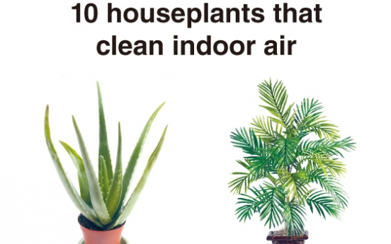 10 air-purifying houseplants