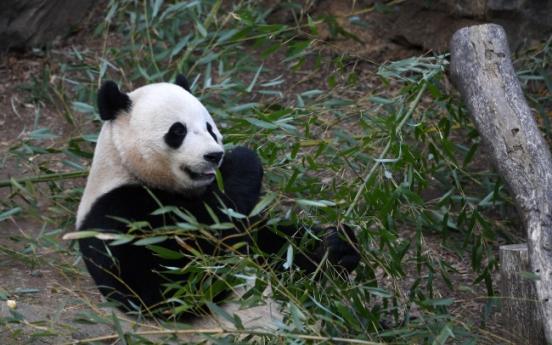 DC panda fans bam-boo-hoo as US-born cub leaves for China