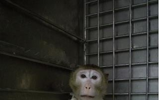 Monkey survives for record 51 days after pig-heart transplant