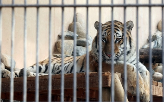Seoul Zoo tigers to be relocated to more natural environment
