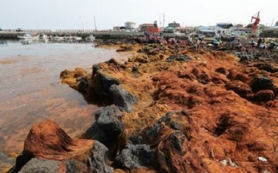 Invasive seaweed off Jeju originates from China: report