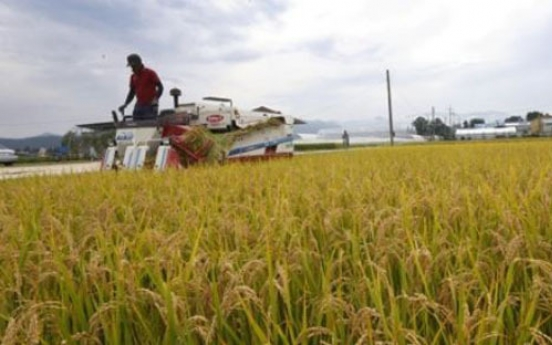 Korea to give rice aid to developing nations