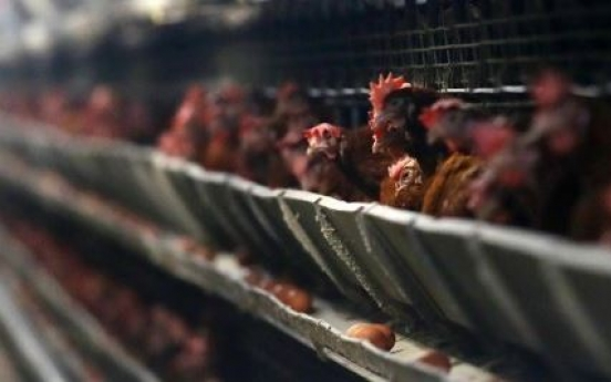 Korea to enhance poultry farming environment
