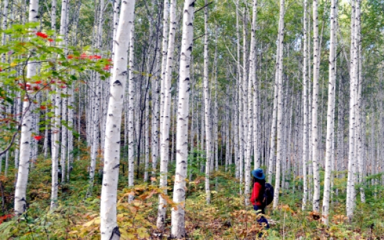 [Eye Plus] Letting loose in sea of birch trees