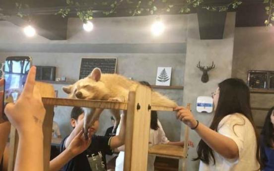 Activist group raises concern over wild animal cafes in Korea
