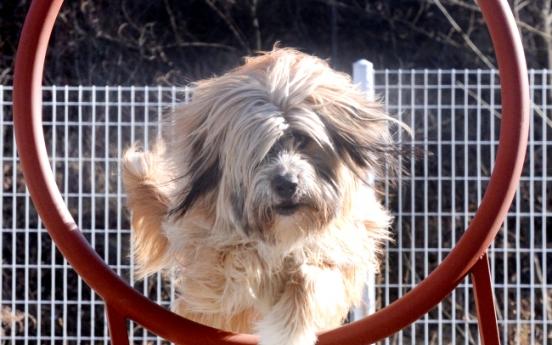 [Eye Plus] Sapsaree, beloved Korean native breed of dogs