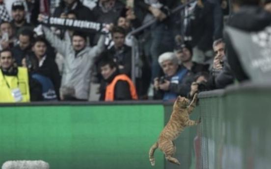 챔스리그 경기장 난입한 길고양이…