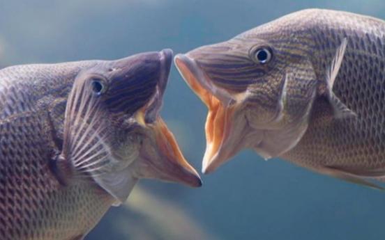 (사진) 사람 방불케 하는 로맨틱 물고기 '뻐끔'