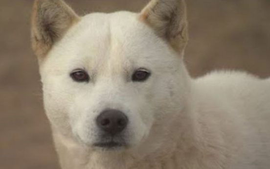 Man booked for killing Jindo dog