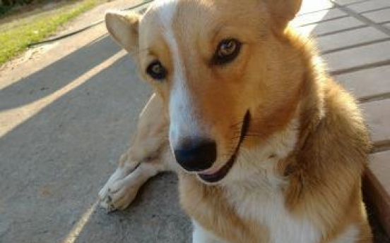 Man probed for eating neighbor's pet dog