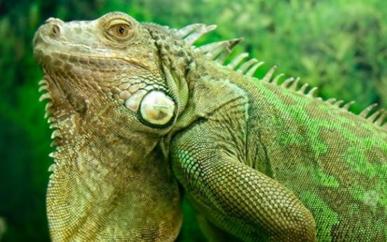(사진)괴상한 녹색 동물 3종