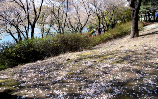 [Photo News] The end of spring cold spell