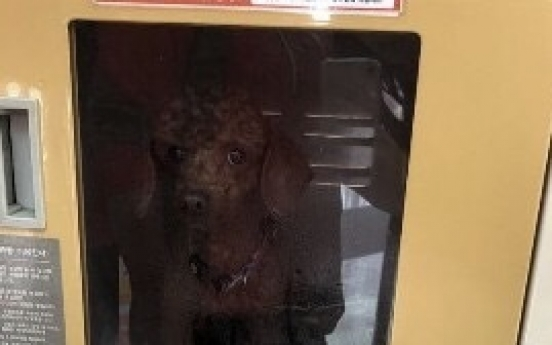 Abandoned dog in mart locker invites public fury
