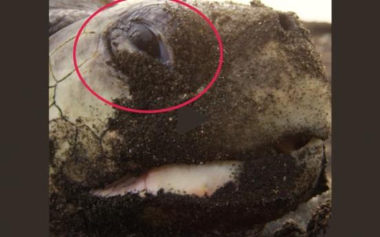 거북의 오묘한 표정..○○하는 중