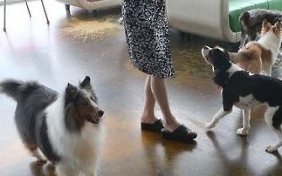 Dog hotel operator accused of fatal dog abuse