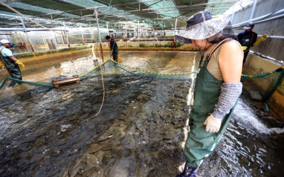 High water temperatures kill fish in Busan