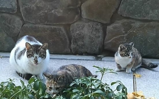 6 feral cats found dead at Busan apartment complex; poisoning suspected
